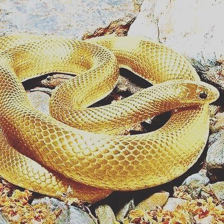 金運 蛇画像