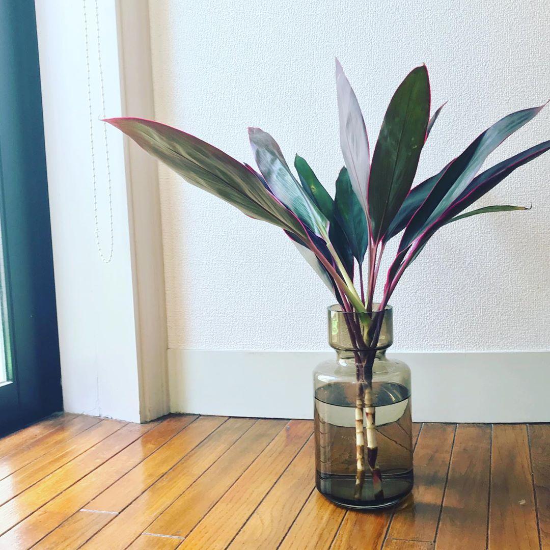 風水 観葉植物