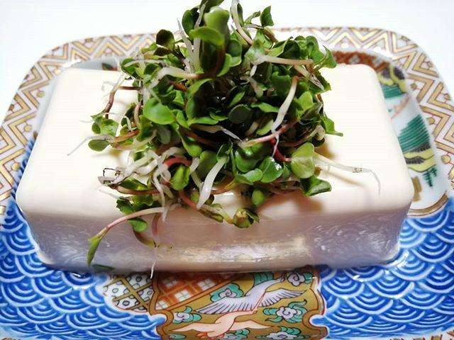 風水 豆腐