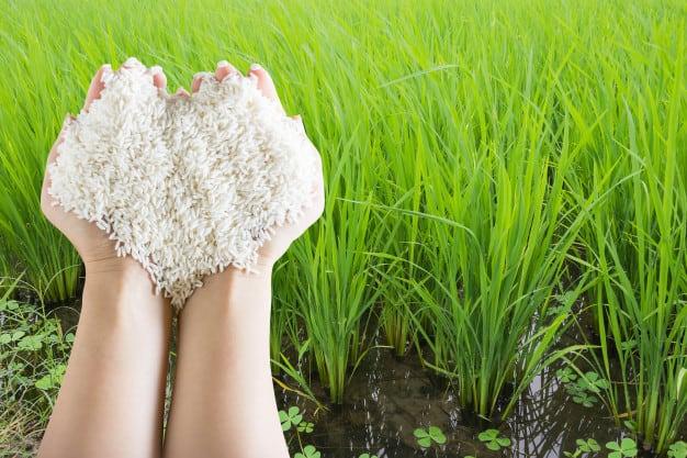 お米 虫 防虫剤